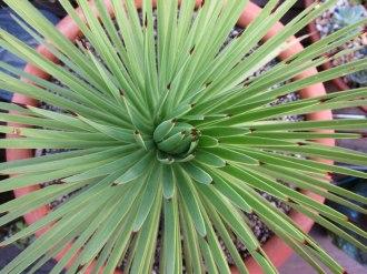 agave-macro3