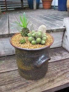 cacti2b
