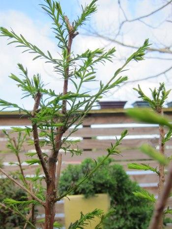 cypress4