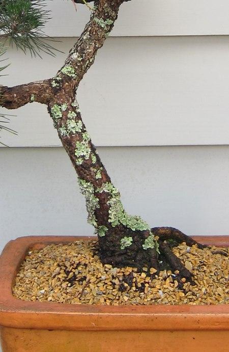 bonsai7b