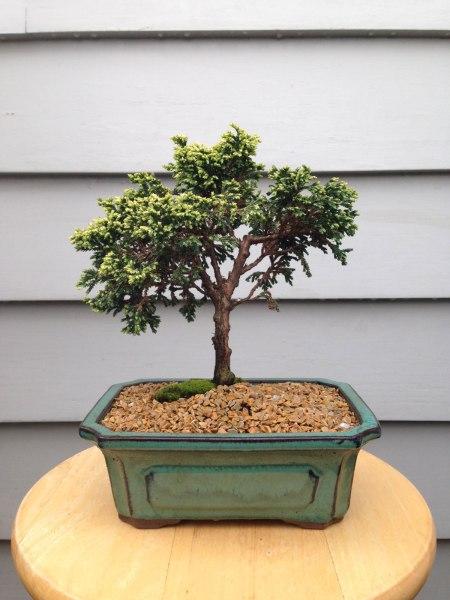 bonsai9a