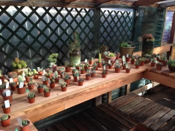 little cacti