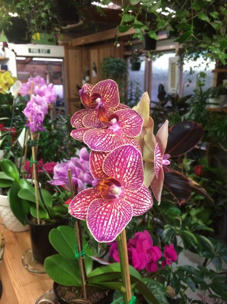 orchid4